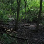 Picture of Swamp