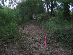 Picture of Cleared Ditch