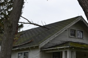Picture of branch sticking in to roof of an old, abandoned house.