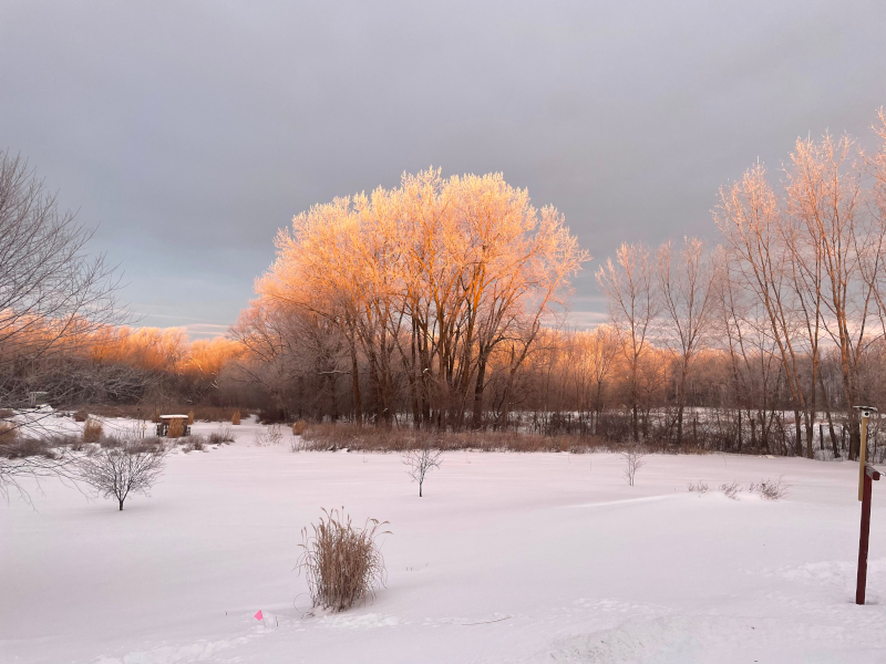Picture of trees lit by morning sun